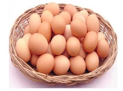 günlük taze bıldırcın yumurtası