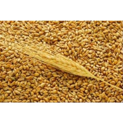 Wheat from Russia, U