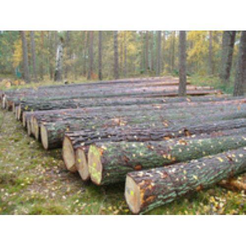 Ağaç Tomruk,Kereste,EU Palet,Kayın kaplama