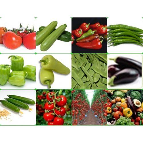 domates,salatal�k,biber,patl�can