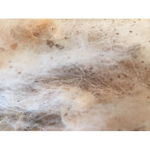 Raw Greasy Sheep Wool