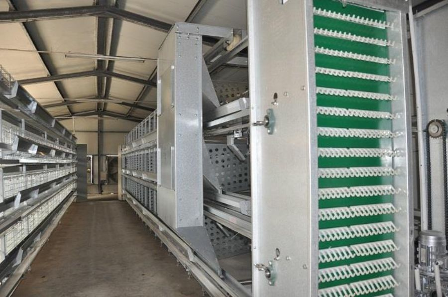 H FRAME BREEDER POULTRY CAGE FOR LAYER AND BROILER BREEDER