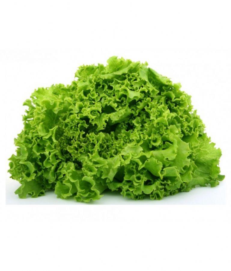 Yeşil Lolorrosso