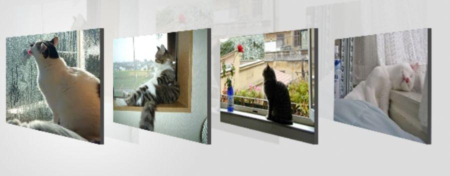 �eliktel Kedi Sinekl