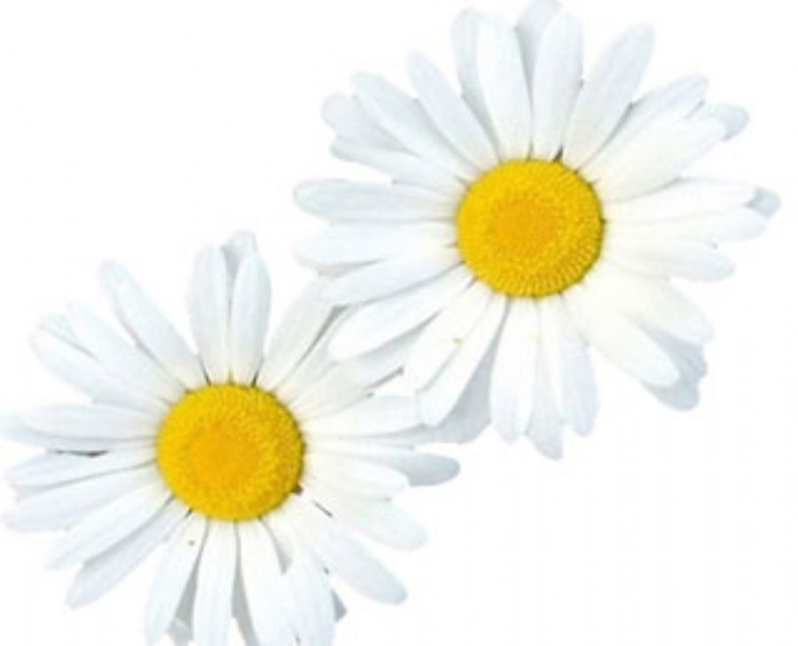 Apigenin Powder Chamomile Extract For Anticancer
