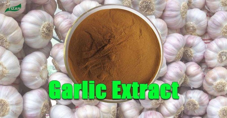 Aged Garlic Extract