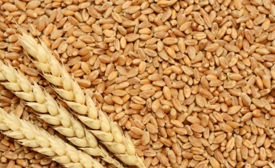 buğday, arpa, mercim